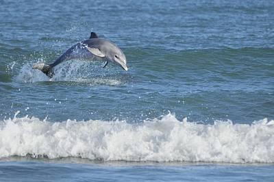 Dolphin In Surf Print by Bradford Martin