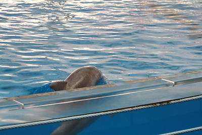 Dolphin Photograph - Dolphin Show - National Aquarium In Baltimore Md - 121210 by DC Photographer