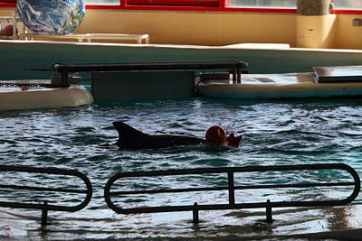 Dolphin Show - National Aquarium In Baltimore Md - 1212111 Print by DC Photographer