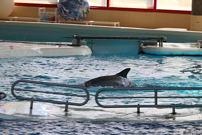Dolphin Show - National Aquarium In Baltimore Md - 1212115 Print by DC Photographer