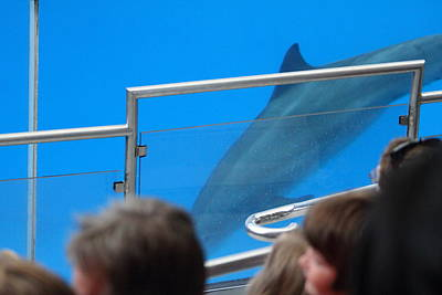 Dolphin Show - National Aquarium In Baltimore Md - 1212120 Print by DC Photographer