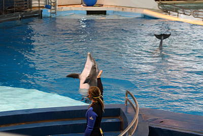 Baltimore Photograph - Dolphin Show - National Aquarium In Baltimore Md - 1212143 by DC Photographer