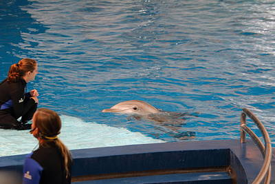 Dolphin Show - National Aquarium In Baltimore Md - 1212152 Print by DC Photographer