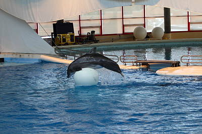 Dolphin Show - National Aquarium In Baltimore Md - 1212171 Print by DC Photographer