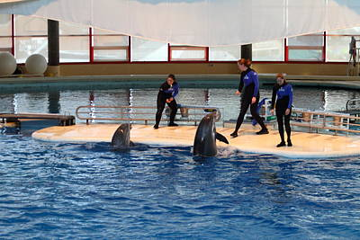 Dolphin Show - National Aquarium In Baltimore Md - 1212188 Print by DC Photographer