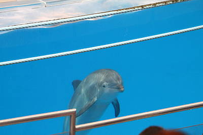 Dolphin Show - National Aquarium In Baltimore Md - 1212190 Print by DC Photographer