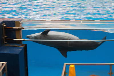 Aquatic Photograph - Dolphin Show - National Aquarium In Baltimore Md - 1212198 by DC Photographer