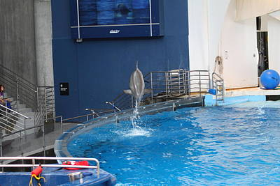 Dolphin Show - National Aquarium In Baltimore Md - 1212201 Print by DC Photographer