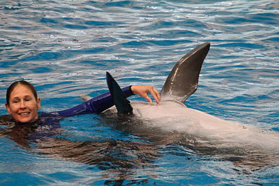 Dolphin Show - National Aquarium In Baltimore Md - 1212232 Print by DC Photographer