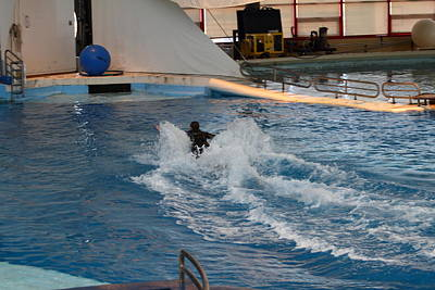 Dolphin Show - National Aquarium In Baltimore Md - 1212245 Print by DC Photographer