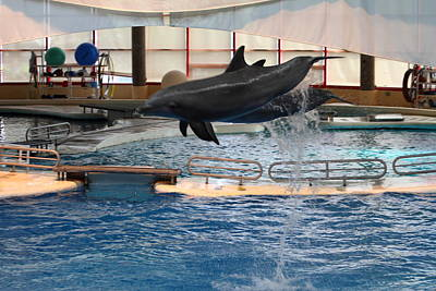 Dolphin Show - National Aquarium In Baltimore Md - 1212250 Print by DC Photographer