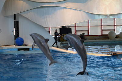 Dolphin Show - National Aquarium In Baltimore Md - 1212256 Print by DC Photographer