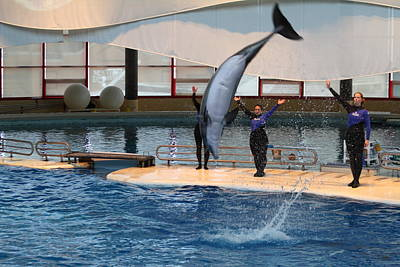 Dolphin Show - National Aquarium In Baltimore Md - 1212273 Print by DC Photographer