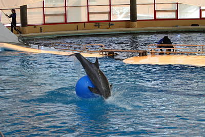 Dolphin Show - National Aquarium In Baltimore Md - 121238 Print by DC Photographer
