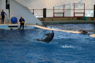 Dolphin Show - National Aquarium In Baltimore Md - 121258 Print by DC Photographer
