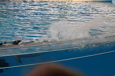 Dolphin Show - National Aquarium In Baltimore Md - 121263 Print by DC Photographer