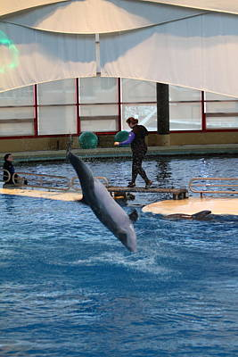 Historic Photograph - Dolphin Show - National Aquarium In Baltimore Md - 121270 by DC Photographer
