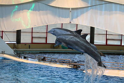 Attraction Photograph - Dolphin Show - National Aquarium In Baltimore Md - 121282 by DC Photographer