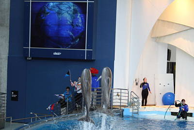 Attraction Photograph - Dolphin Show - National Aquarium In Baltimore Md - 121286 by DC Photographer