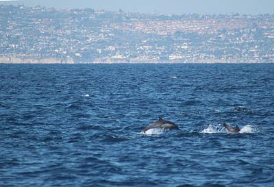 Dolphins Off The San Diego Coast Print by Valerie Broesch