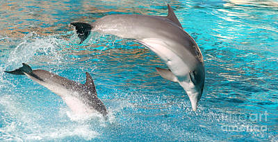 Swimmer Photograph - Dolphins Show by Michal Bednarek