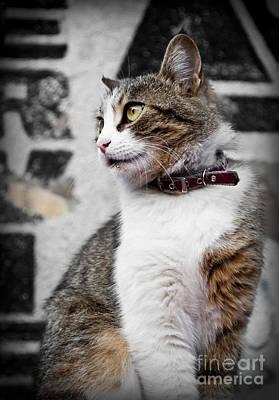 Domestic Cat Print by Jelena Jovanovic