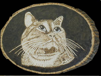 Pyrography Drawing - Domestic Cat Pet Portrait by H Leslie Simmons