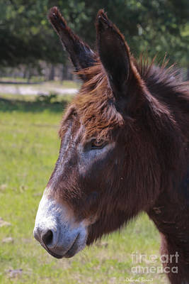 Donkey Pose Print by Deborah Benoit
