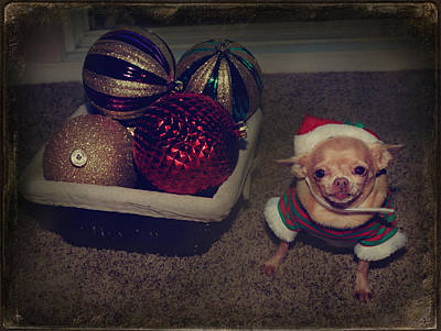 Chihuahua Photograph - Don't Hang Me On Your Tree by Laurie Search