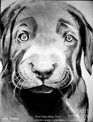 Animal Shelter Drawing - Don't Shop. Adopt by Alex Thomas