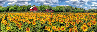 Sunflower Field Painting - Door County Field Of Sunflowers Panorama by Christopher Arndt