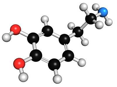 Dopamine Neurotransmitter Molecule Print by Molekuul