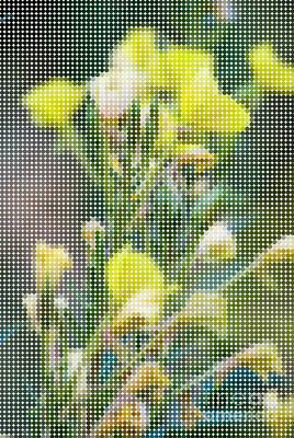 Dots Photograph - Dot Yellow Flowers 2 by Pittsburgh Photo Company
