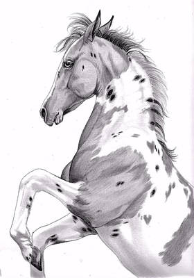 Pinto Drawing - Double Hearts Dandy by Cheryl Poland