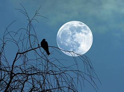 Moonlit Night Photograph - Dove Against A Full Moon by Detlev Van Ravenswaay
