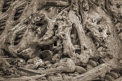 Rabbit Photograph - Down The Rabbit Hole by LeeAnn McLaneGoetz McLaneGoetzStudioLLCcom