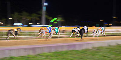 Dog Race Track Photograph - Down The Track by Keith Armstrong