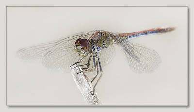 Dragon Fly Art 01 Original by Kevin Chippindall