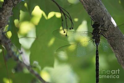 Dragonfly Print by Zori Minkova