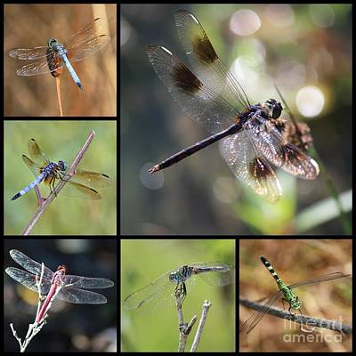 Dragonflies On Twigs Collage Print by Carol Groenen