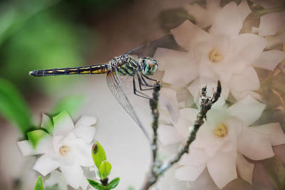 Dragonfly And Gardenias Print by Bonnie Barry