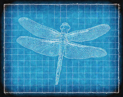 Dragonfly Blueprint Print by Robert Jensen