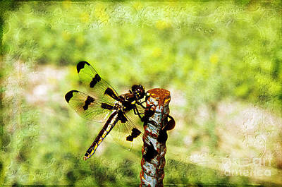 Dragonfly Eating Breakfast Print by Andee Design