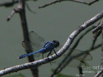 Dragonfly Print by Greg Patzer