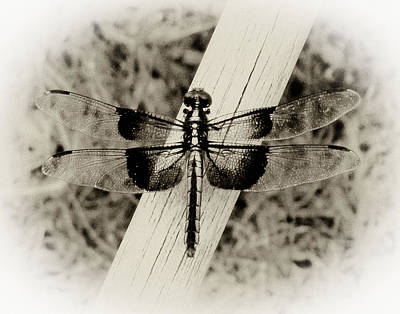 Dragonfly In Sepia Print by Tony Grider