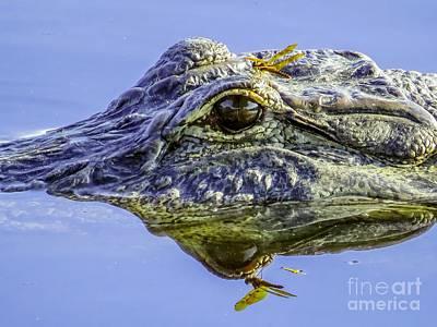 Crocodile Photograph - Dragonfly On The Alligator Eye by Zina Stromberg