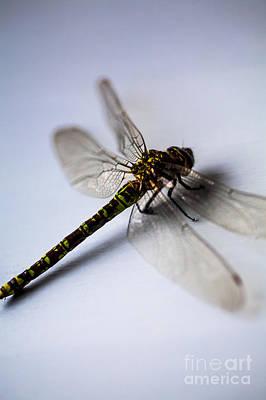 Macro Dragonfly Photograph - Dragonfly Portrait by Jan Bickerton