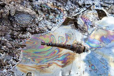 Destruction Photograph - Dragonfly Stuck In Tar Sand by Ashley Cooper
