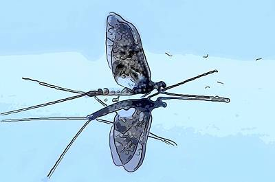 Dragonfly Original by Toppart Sweden