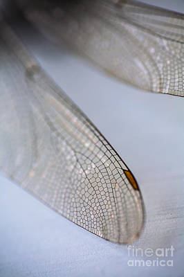 Macro Dragonfly Photograph - Dragonfly Wings 2 by Jan Bickerton